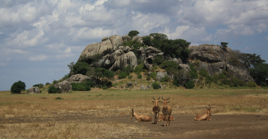 Celeb Spot The Lion King Cast In The Serengeti