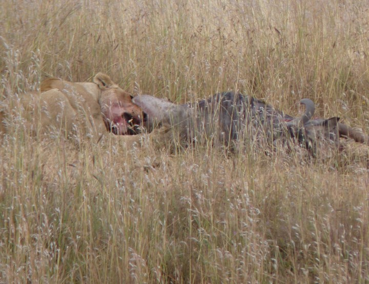 Camping in the Serengeti: the Real Story