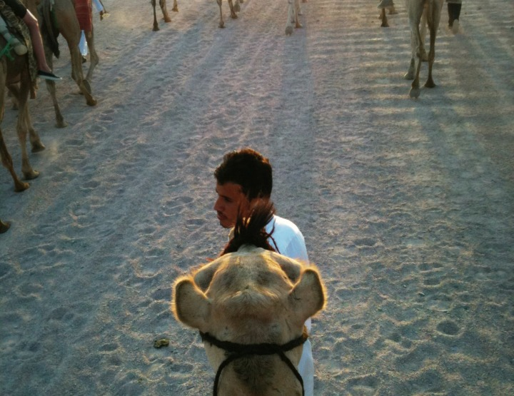 What it's Like Riding a Camel for a Full 20 Minutes: That's 1,200 Seconds, I Counted
