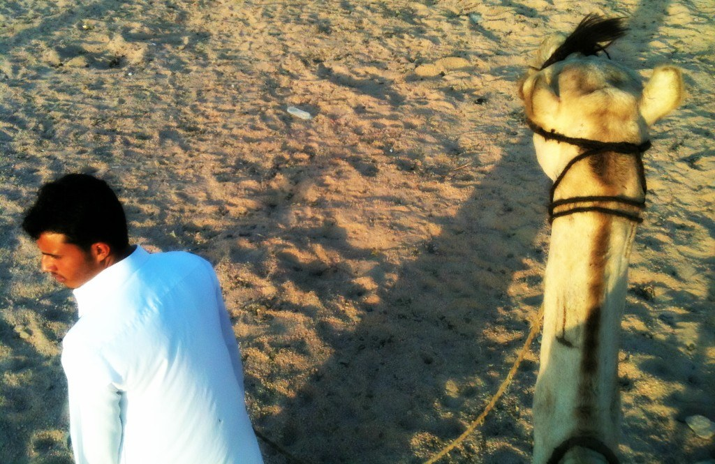 Riding a camel in Sharm el Sheikh