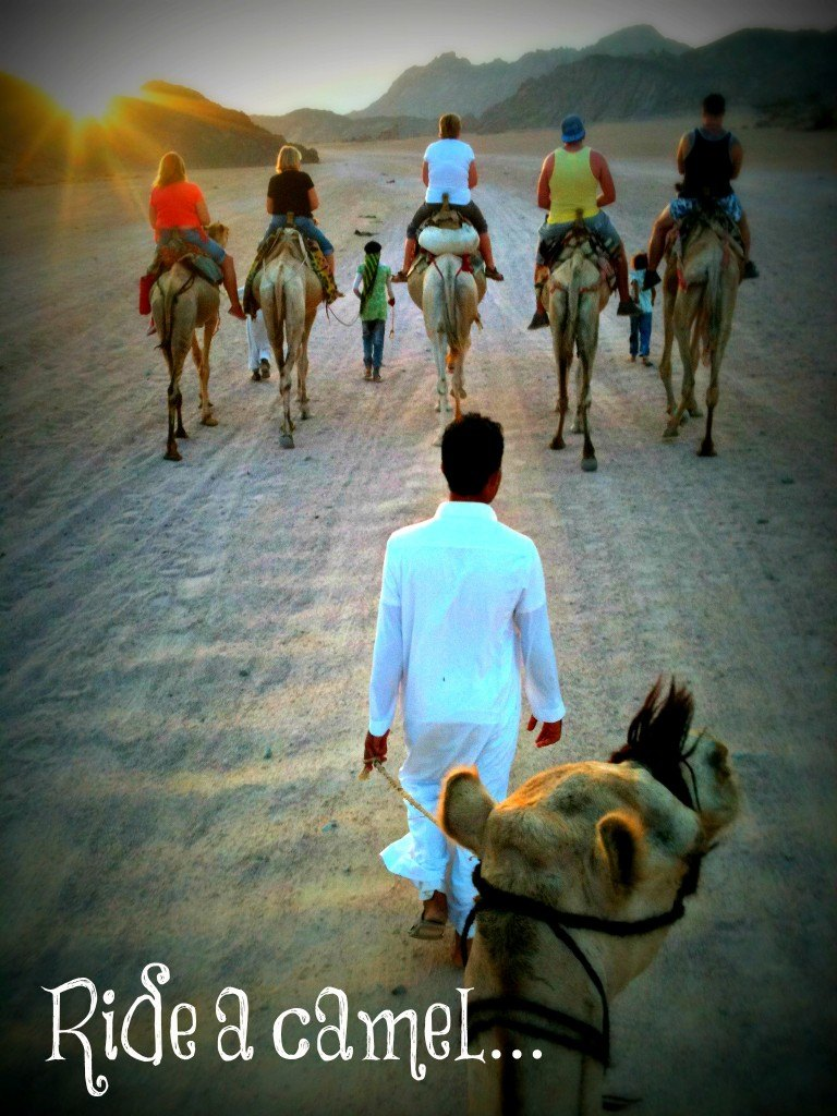 Exploring the desert by camel in Sharm el Sheikh