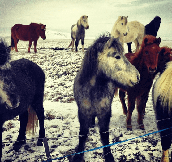 2 Minutes in Iceland: Reykjavik, Blue Lagoon, Icelandic Horses, Geysirs and Gulfoss