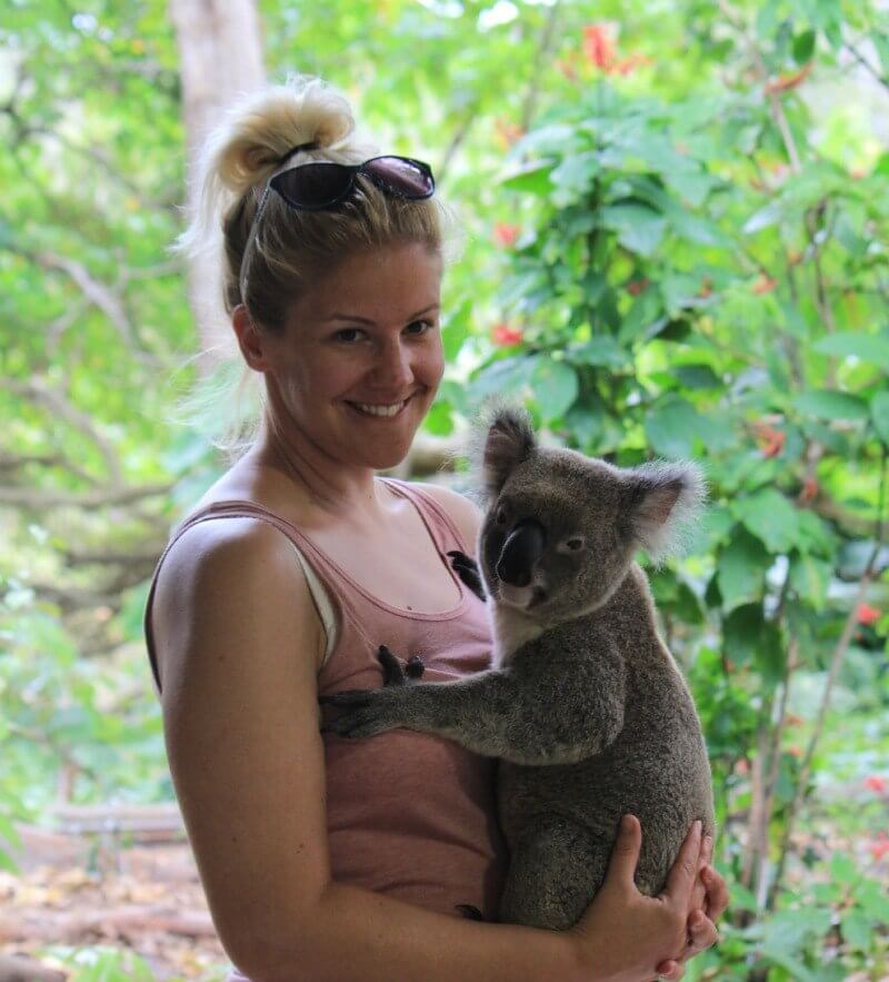life as a Koala in Australia