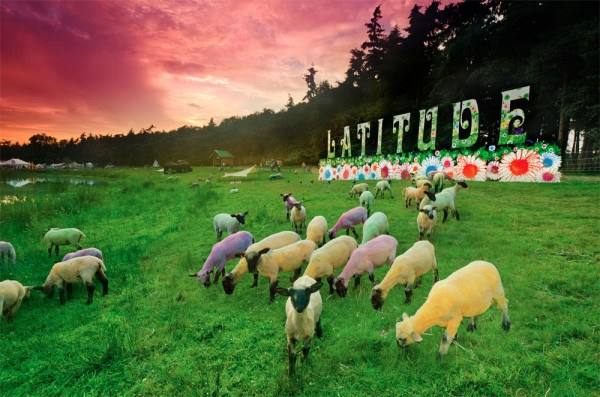 latitude-festival-dyed-painted-sheep