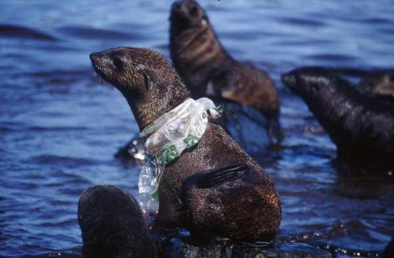 The effects of plastic bags on wildlife