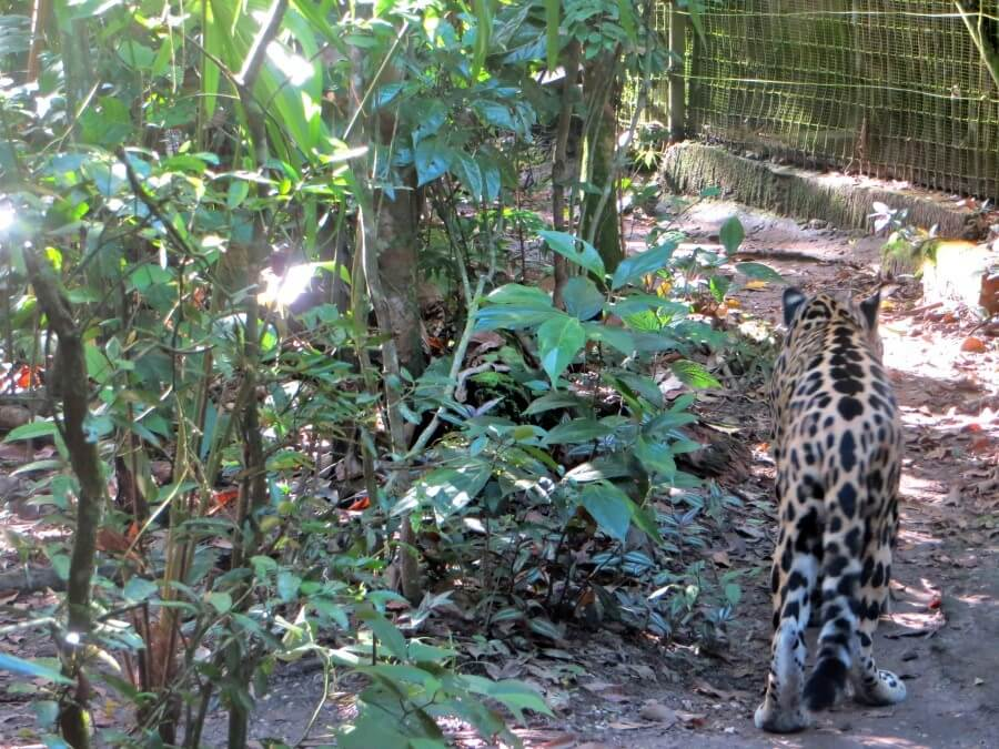 Belize City Zoo