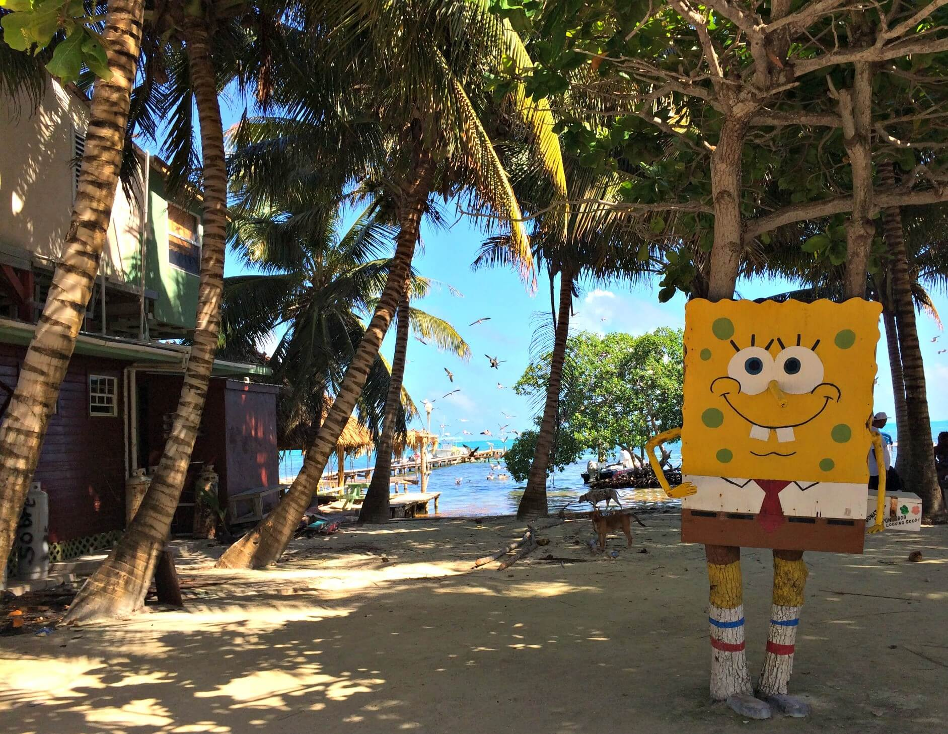 Caye Caulker things to know