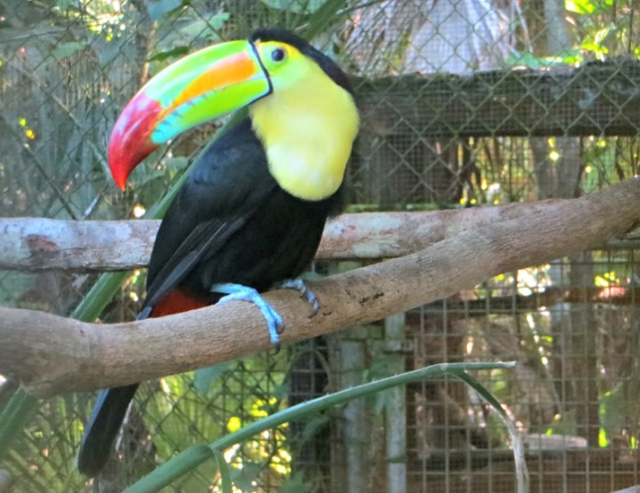 Introducing the Animals of Belize City Zoo: Say Hello