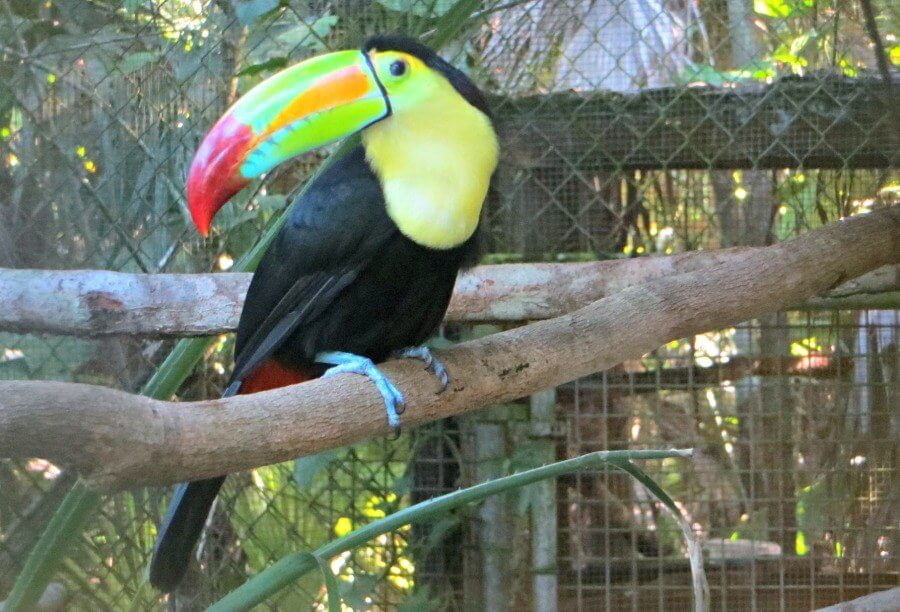 Animals at Belize Zoo