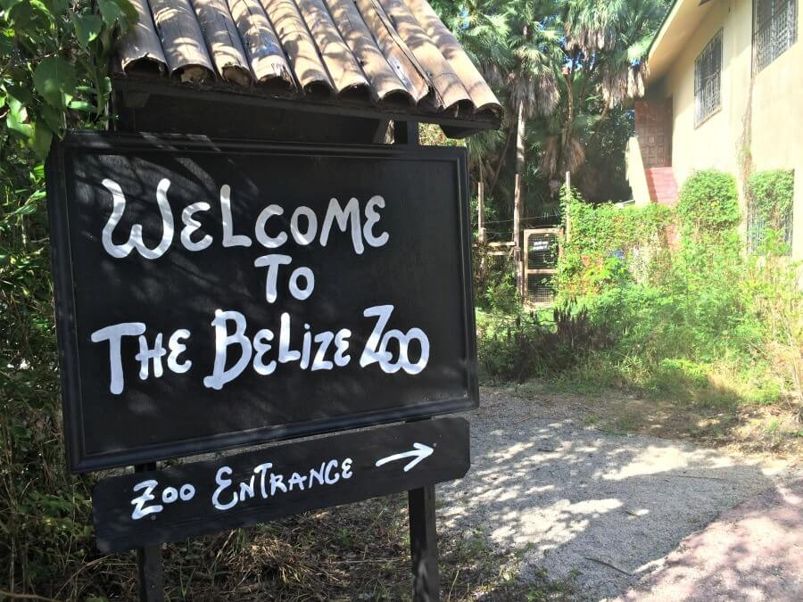 Animals of Belize Zoo