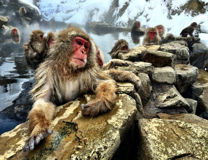 Chilling With the Snow Monkeys in Nagano