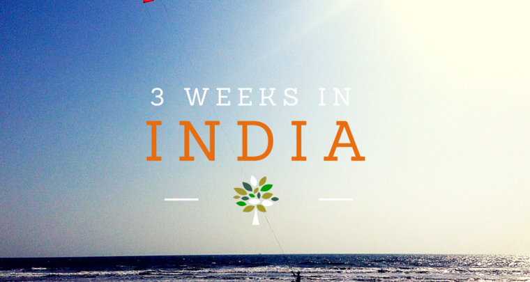 3 Weeks in India Itinerary: Delhi, Kerala, Goa and Mumbai