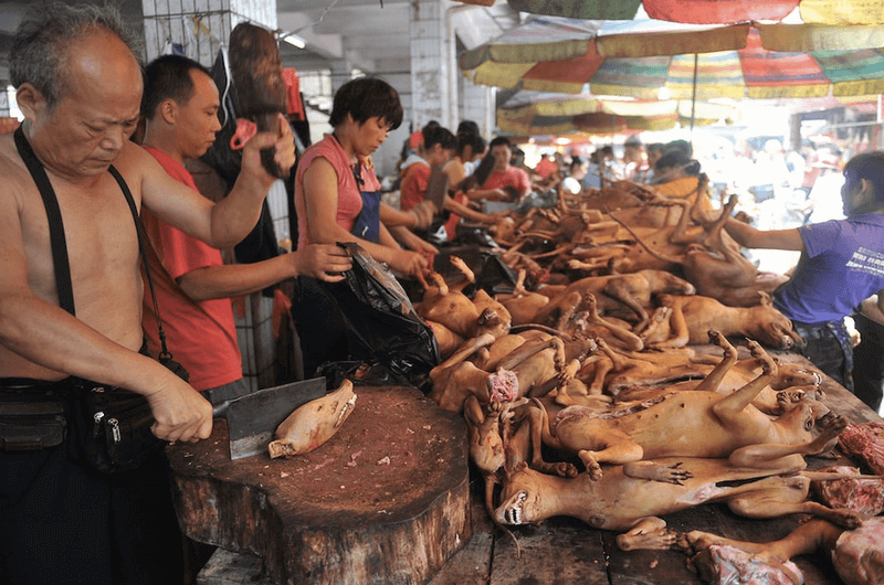 cruellest festivals in the world