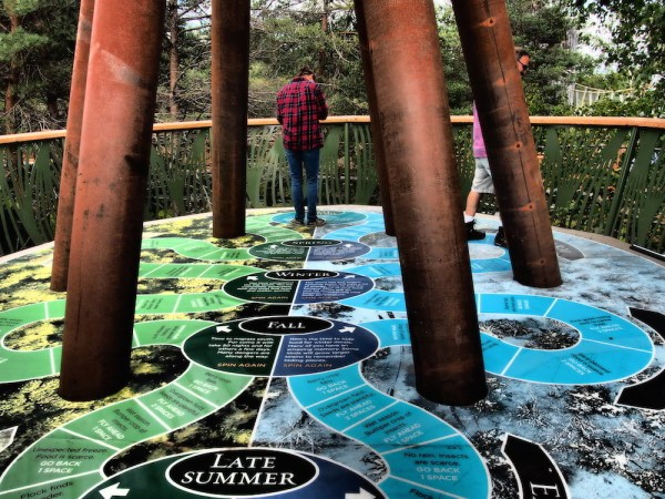 Game of life at the Wild Center