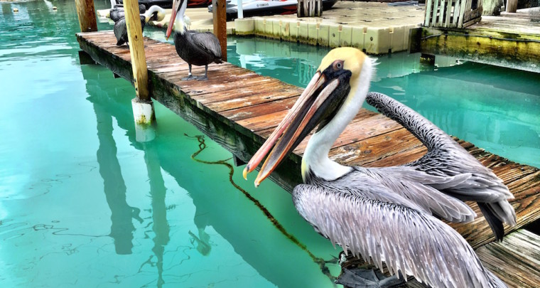 8 Best Moments from My Trip to the Florida Keys