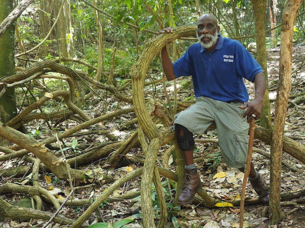 Rainforest Walk in St Kitts