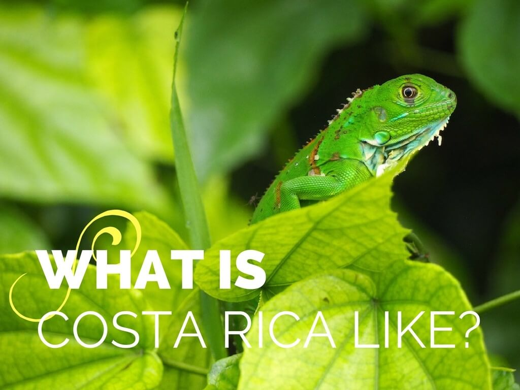 Costa Rica opinion