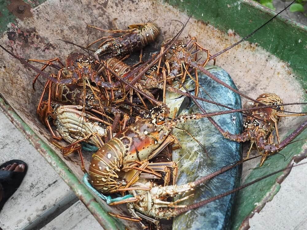Eating lobster in St Kitts