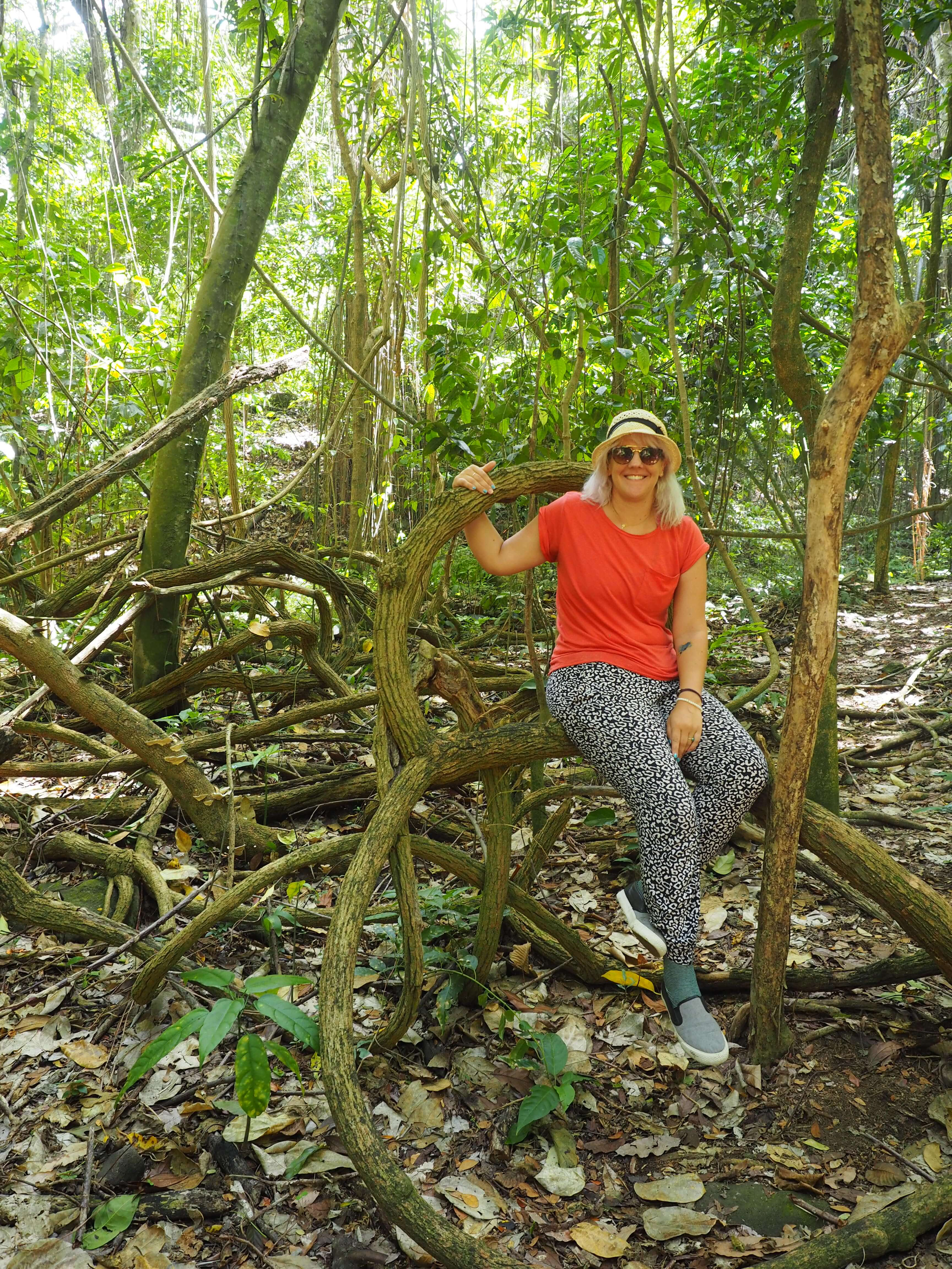 In the forest in St Kitts