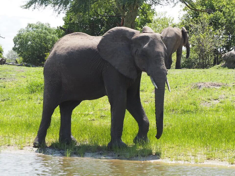 Liwonde National Park Malawi Safari