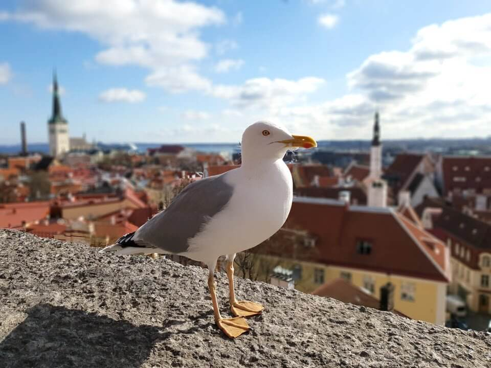Viewpoint in Tallinn