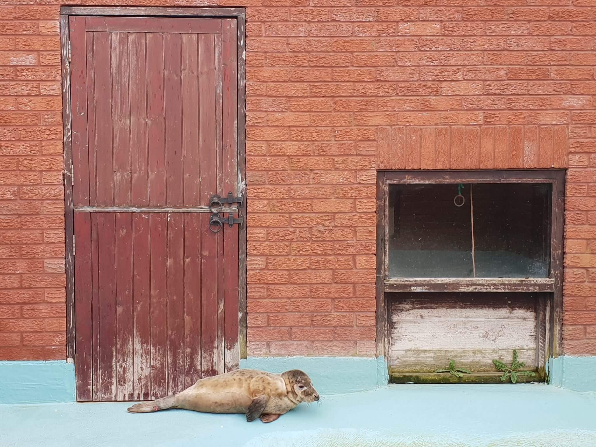 Seal Wildlife Sanctuary