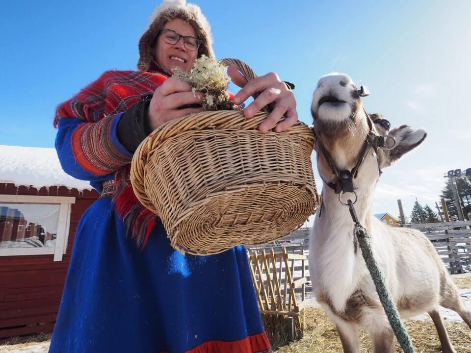 Levi Finland Reindeer