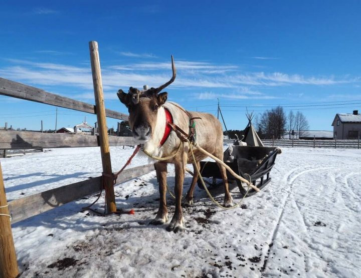 14 Coolest Things to Do in Levi, Lapland (Finland)