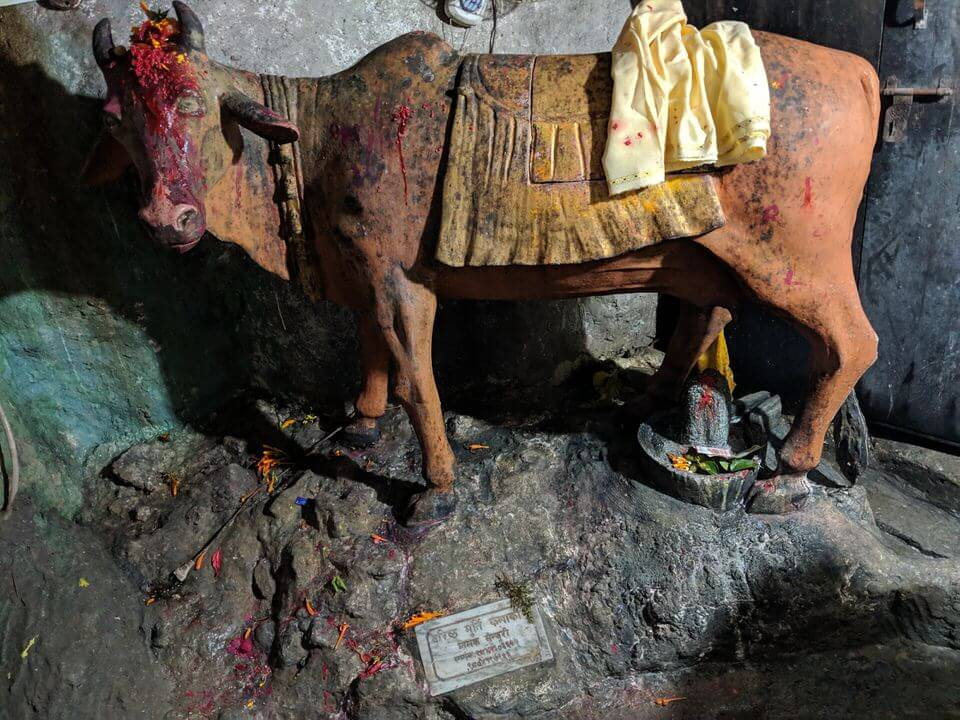 Cow in the cave Pokhara