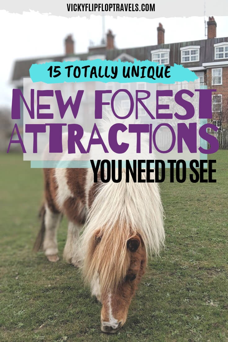 Things to see in the New Forest