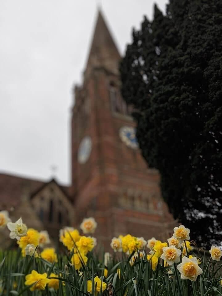 Lyndhurst daffodils