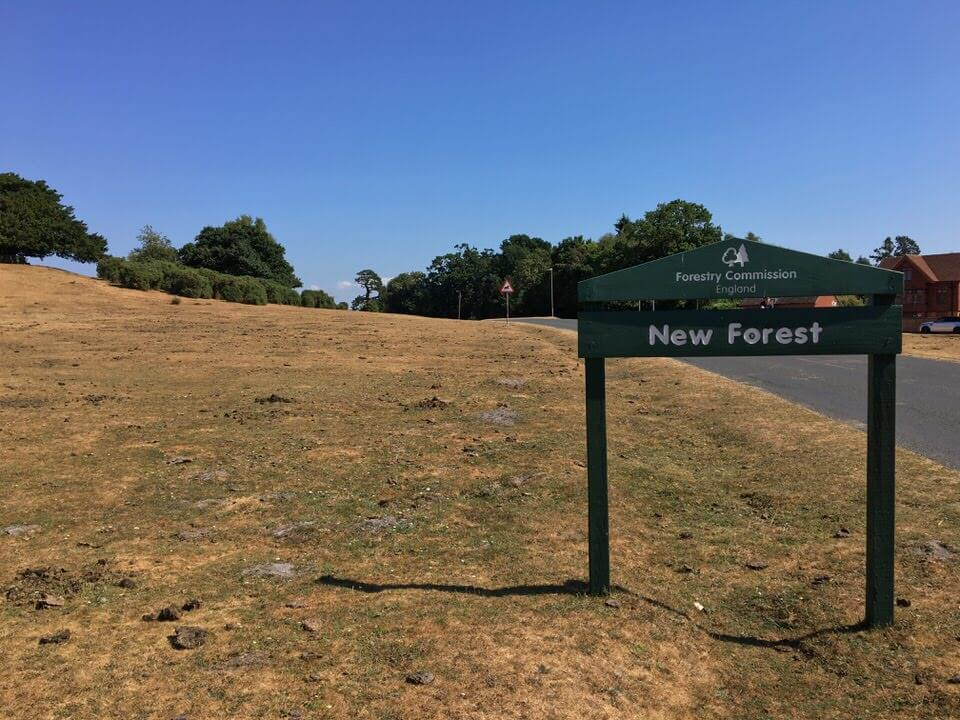wild camping new forest