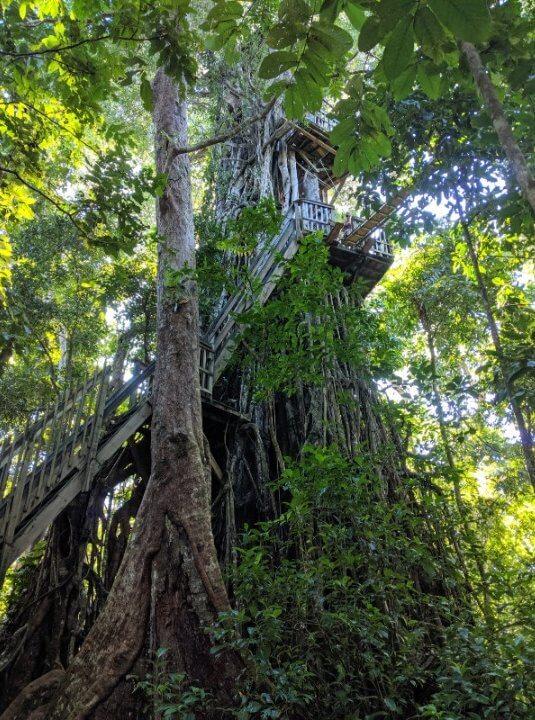 Canopy walk in Samoa
