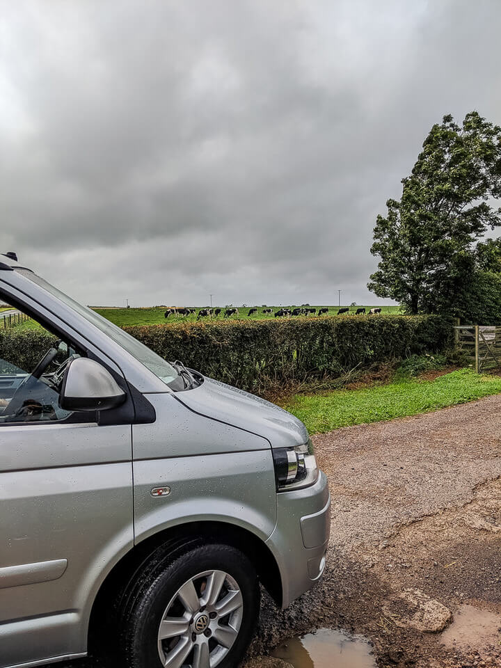 cows and cars in somerset