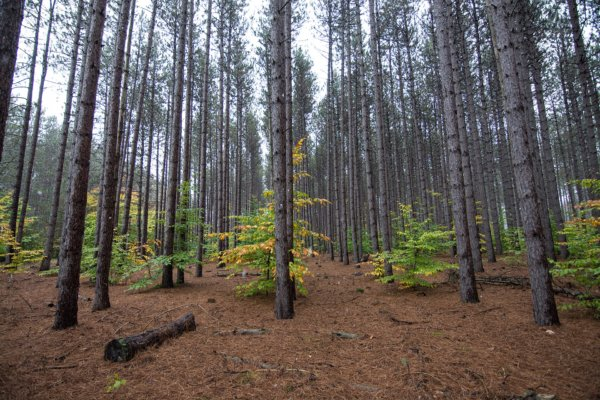 Huron-Manistee National Forest