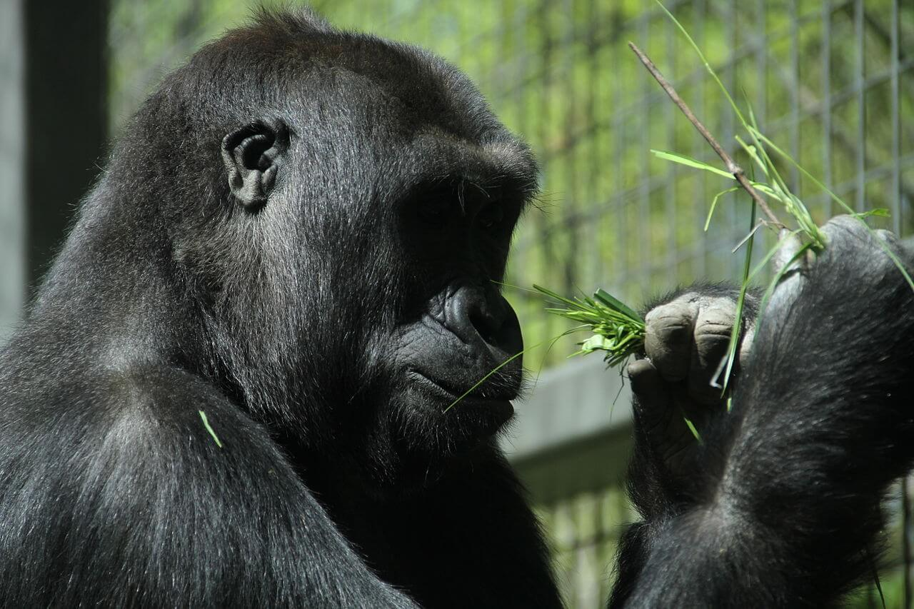 what are the biggest zoos in the world