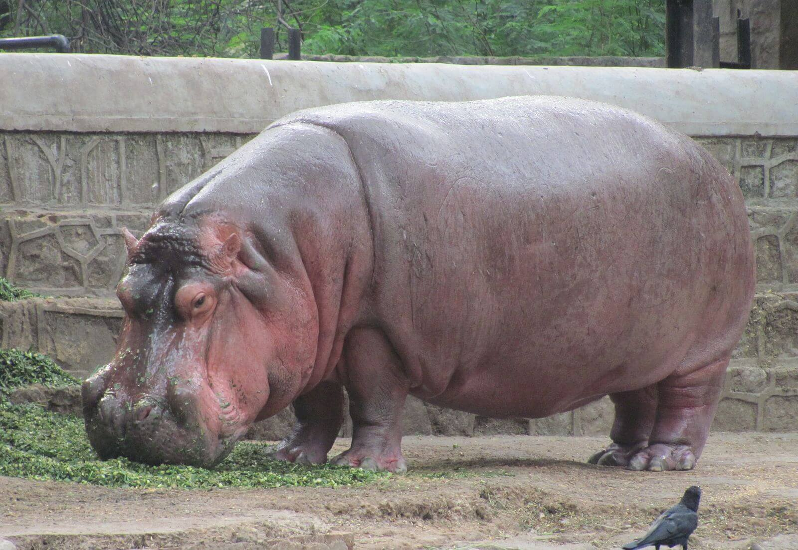 big zoos in the world