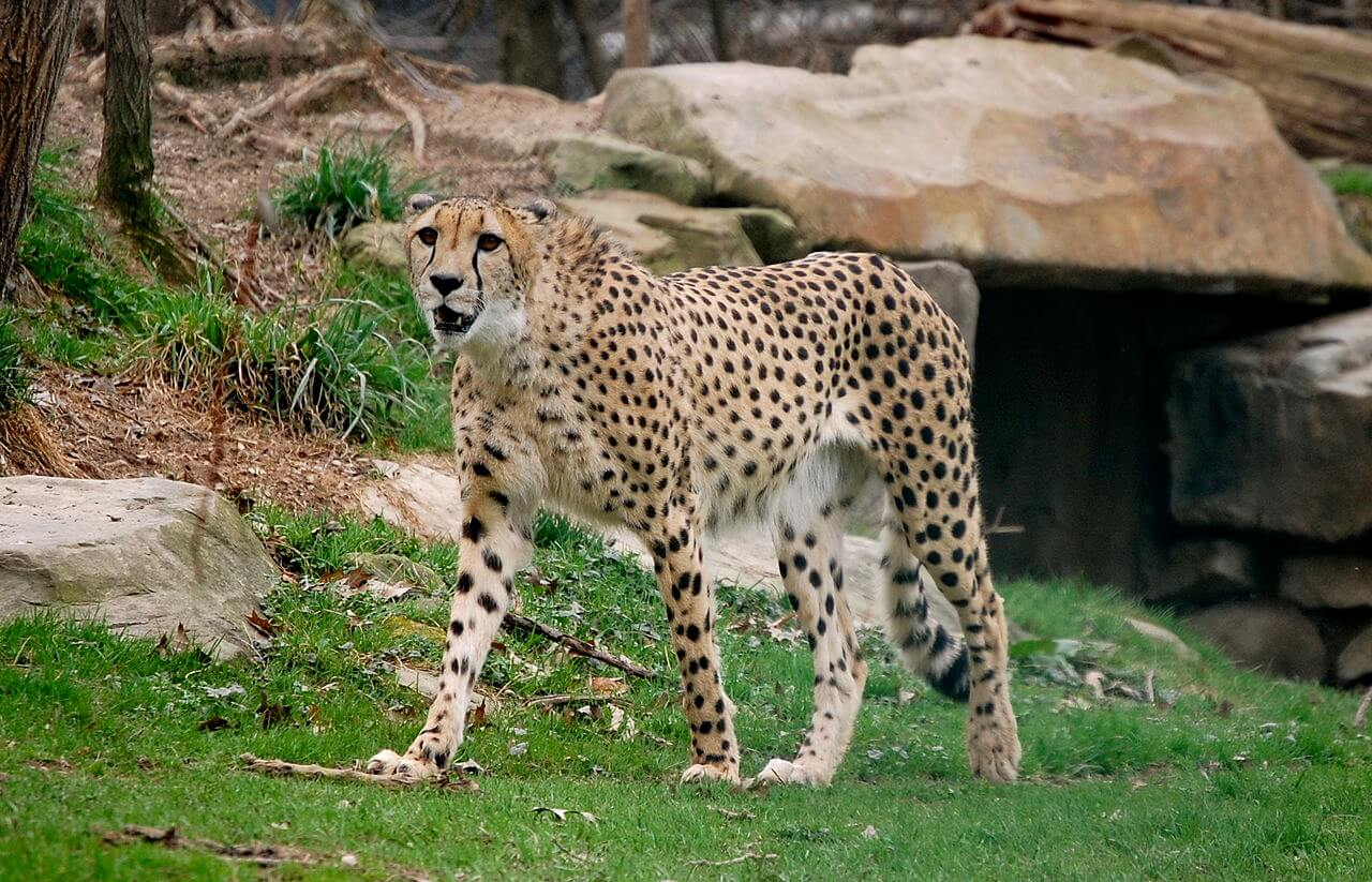 Largest zoos in America