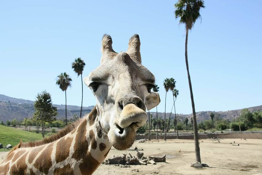 Largest zoos in the world