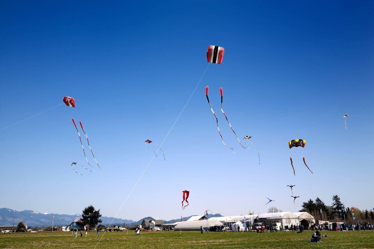 Amazing kite festivals