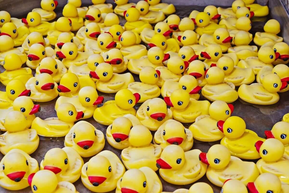 october festival duck